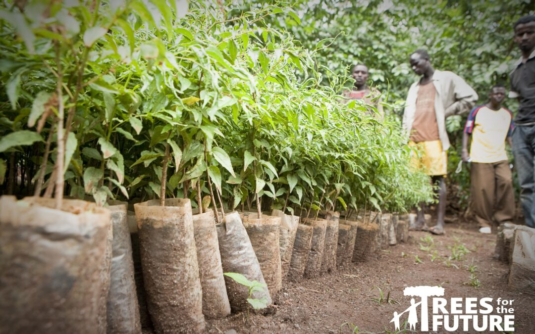Craters & Freighters Helps Trees for the Future Reach 200 Million Tree Mark